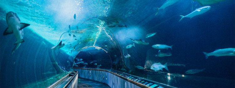 aquarium-bay-san-francisco-attraction